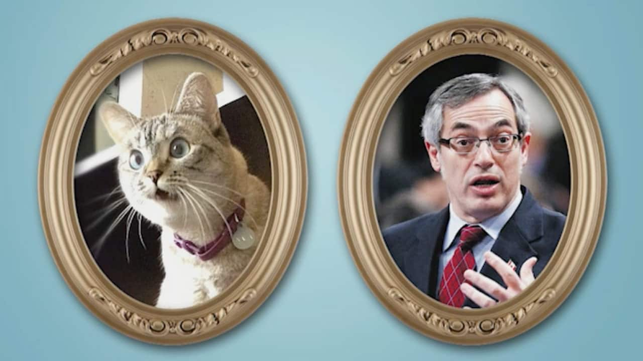 Laureen Harper Cats
