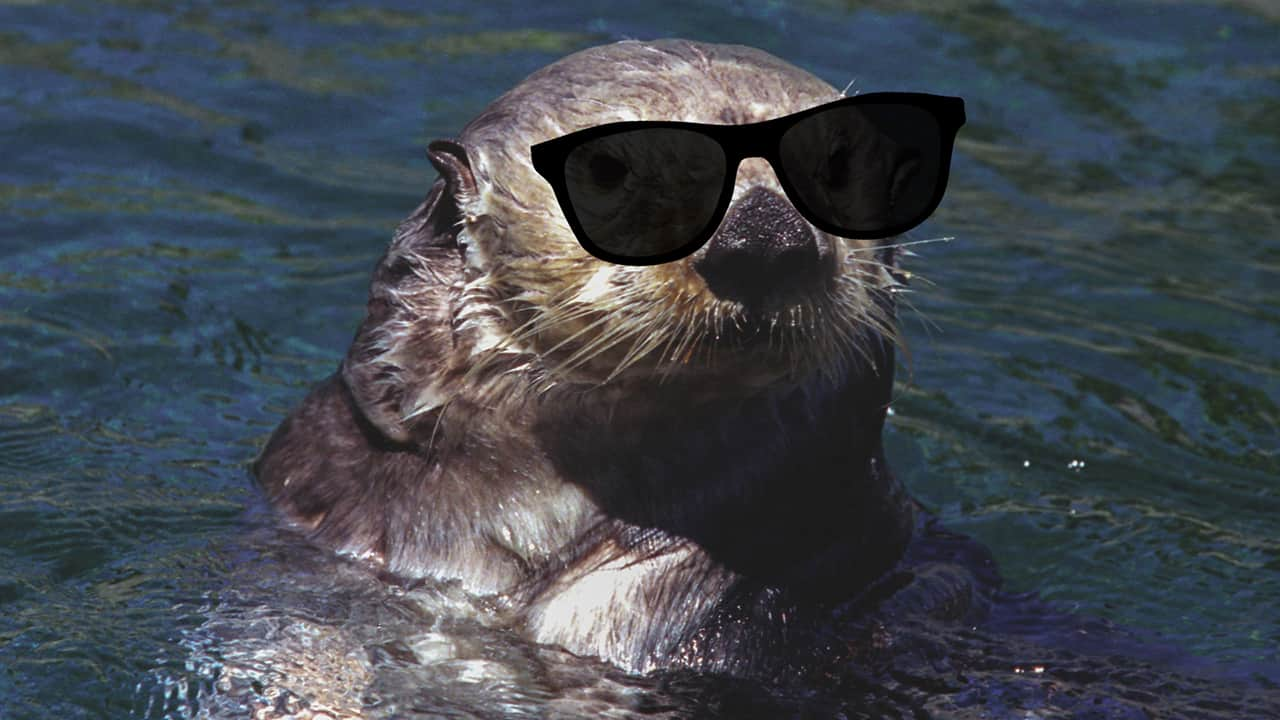 Outlaw Otter (Dec. 3)