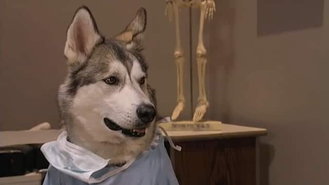Littlest Hobo M.D.
