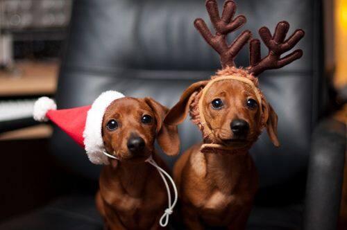 christmas dogs.jpeg