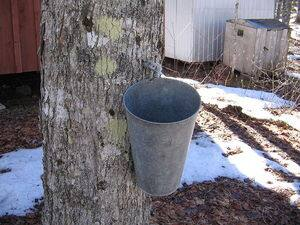 800px-Maple_syrup_bucket.jpg