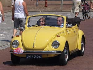 yellow bug.jpg