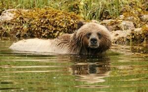 Grizzly1-537x333.jpg