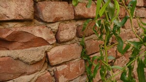 brick-wall-and-ivy.jpg