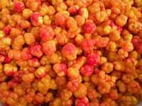 cloudberry.jpg