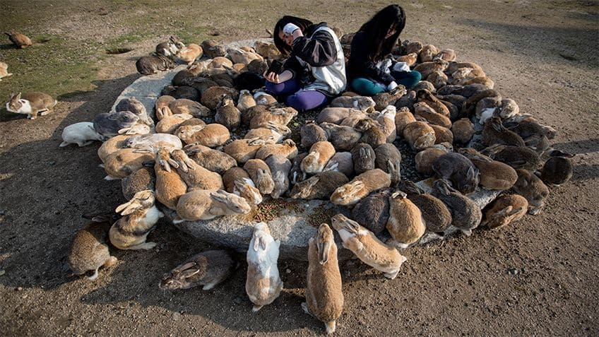 Two young girls surrounded by dozens of bunnies.