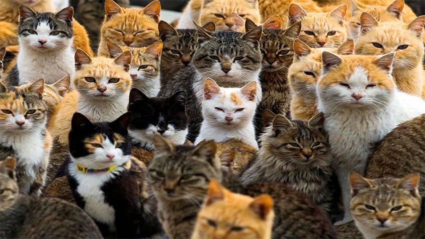 Dozens of cats of all colours stare at the camera.