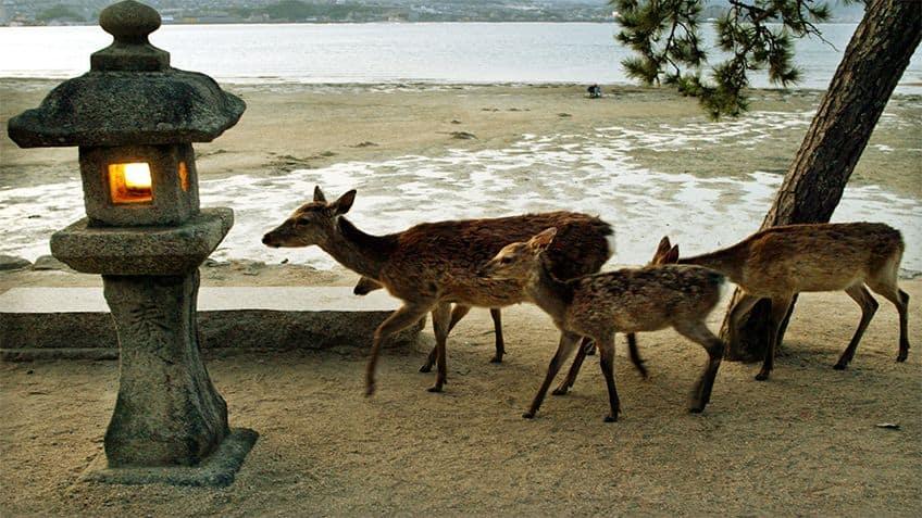 Four deer on a stroll near a beach.