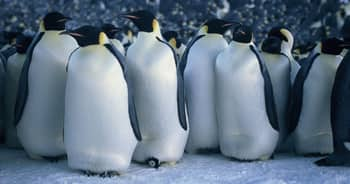 marchofthepenguins_title.jpg