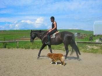 horse and dog.JPG