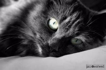 cat9ceb0001.jpg