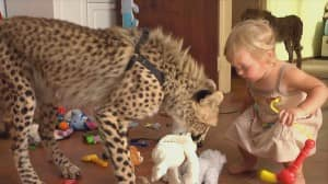 Wild & Dangerous: The World of Exotic Pets