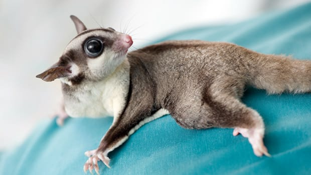 Twelve Exotic Pets That You Ve Probably Never Heard Of Doc Zone