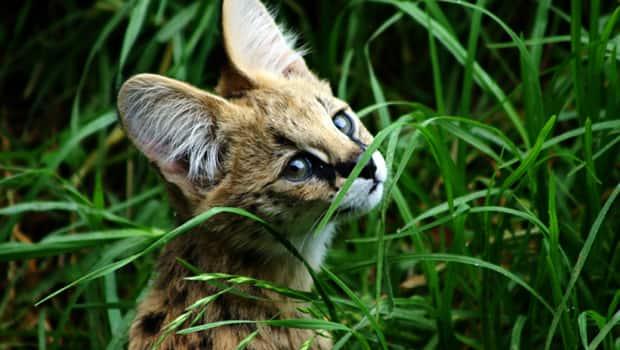 Wild & Dangerous: The World of Exotic Pets: Twelve Exotic