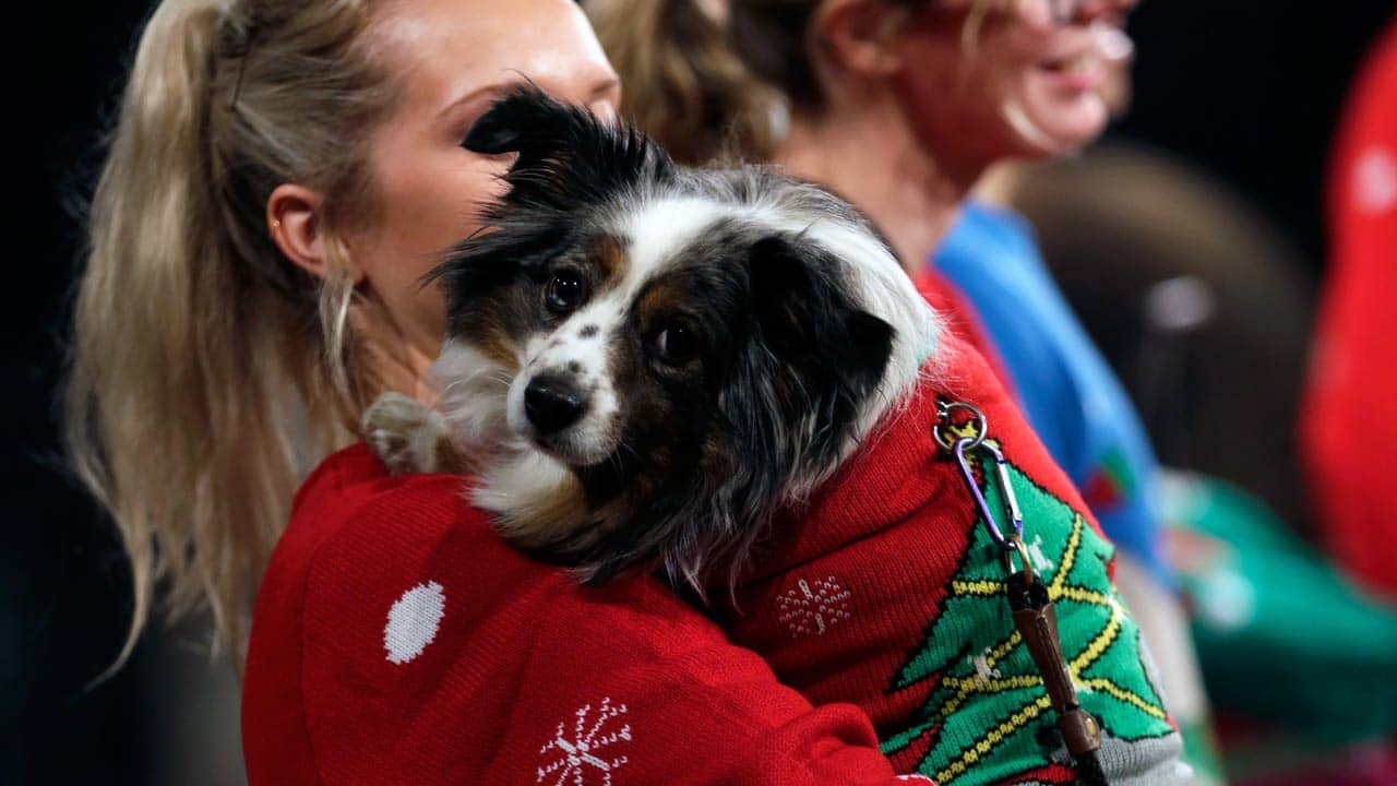Matching Ugly Christmas Sweaters For Dog And Owner.Season 12 Now You And Your Dog Can Wear Matching Ugly