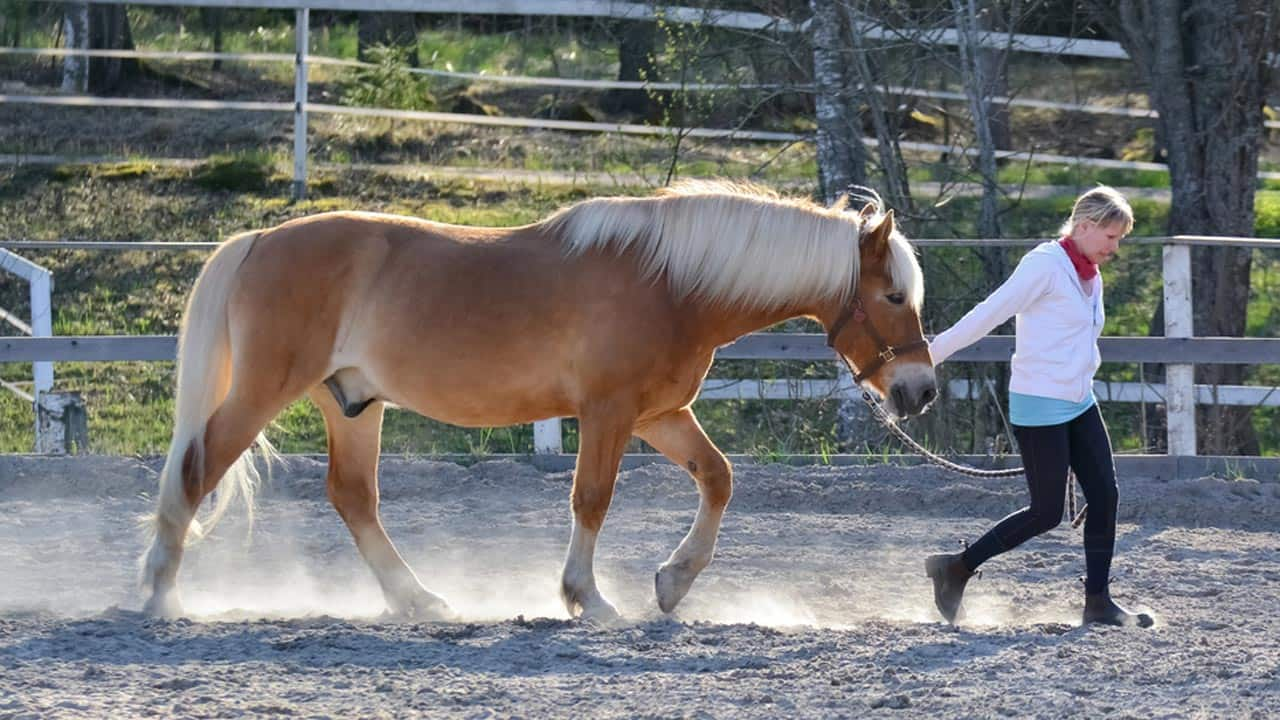 Focus. Compassion. Trust. What horses can teach us about good leadership