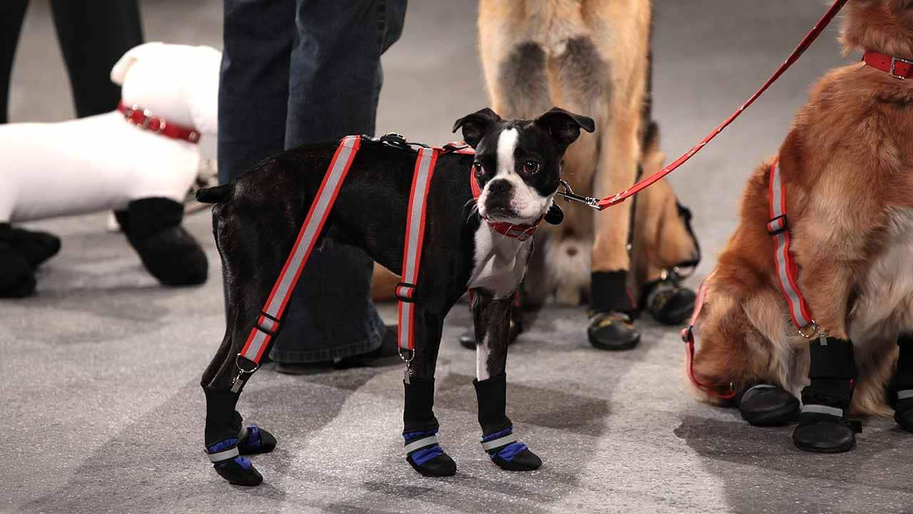 Dog Boot Suspenders Canada