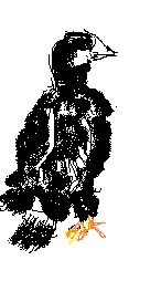 eaglet_3.jpg