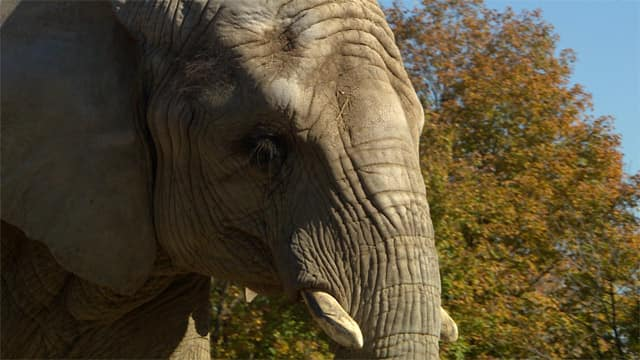 Live Blog - Follow the Elephants