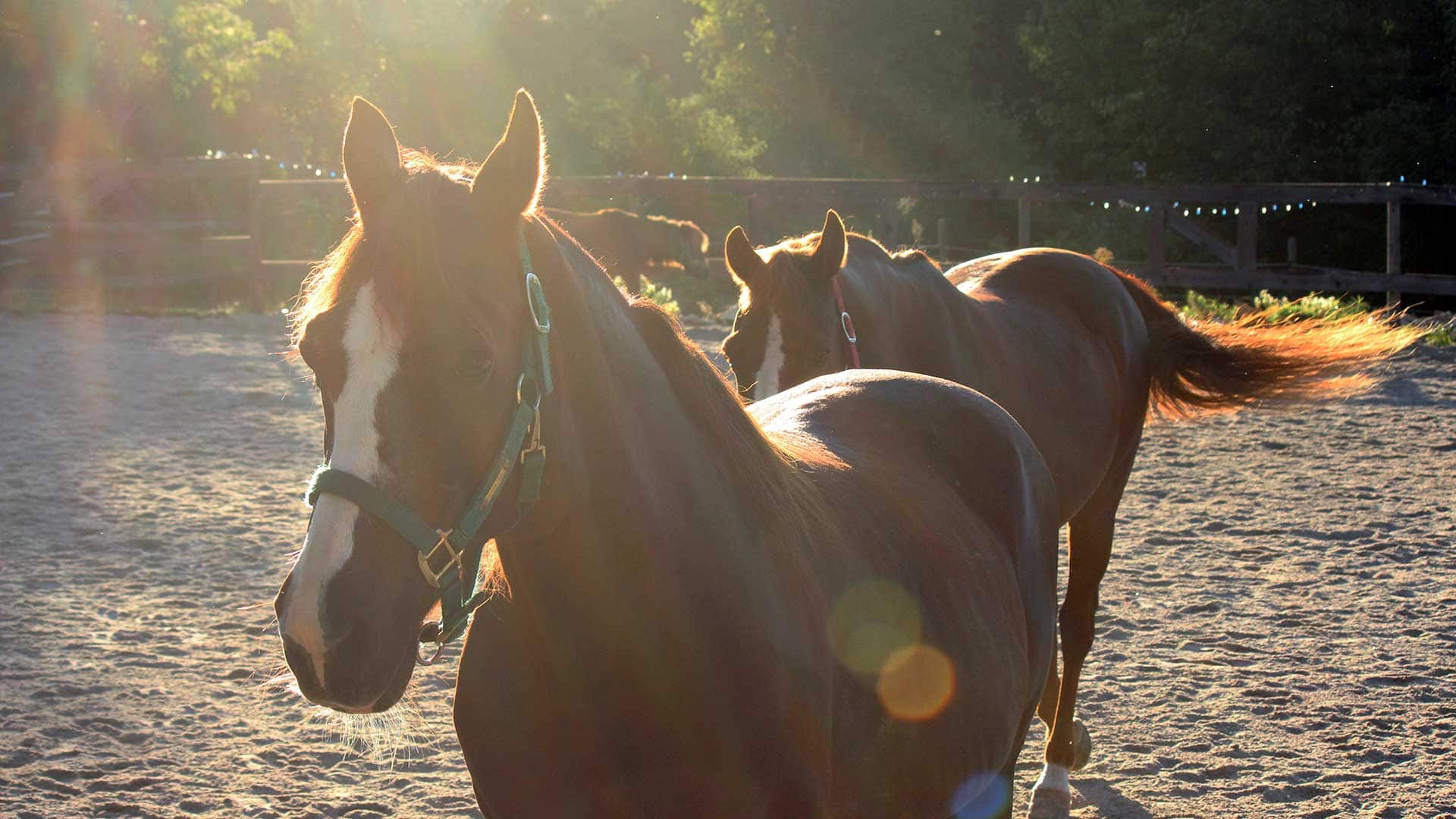 Lessons Horses Can Teach Us
