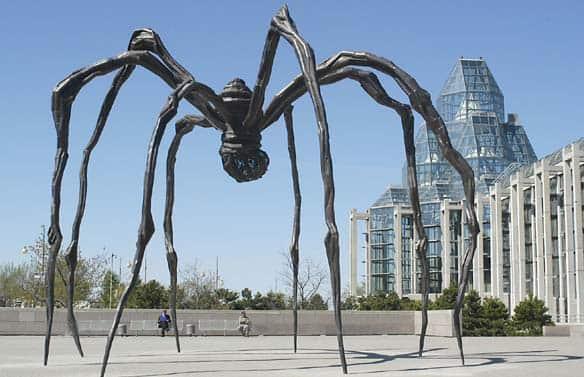 Les araignées sont affectées par les activités humaines
