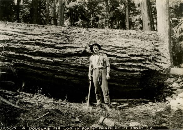 A Douglas Fir Log in Forest North of Port Haney, B.C. (1933), photographer unknown.