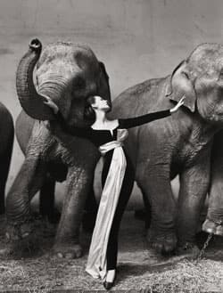Dovima with Elephants was taken in 1955 and fetched $1.15 million US.