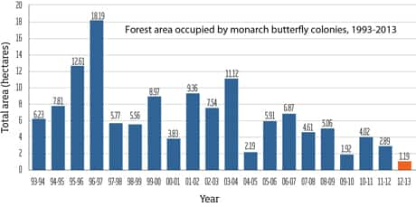 Although it fluctuates from year to year, the monarch butterfly population overwintering in Mexico seems to be on a downward trend.