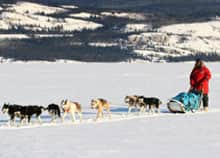 Jamaican dogsled lead musher Devon Anderson led a team across Lake Laberge on an overnight training expedition in February, during a visit to observe the Yukon Quest.