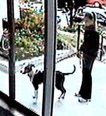The pit bull and one of two people with it when Ellen Sy and her daughter were attacked are seen on a videotape made at Sy's apartment.