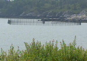 Fishermen are worried that herring weirs in the Bay of Fundy are empty this season.