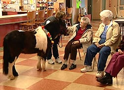 The horses have been visiting seniors and adults and children with special needs throughout the summer.