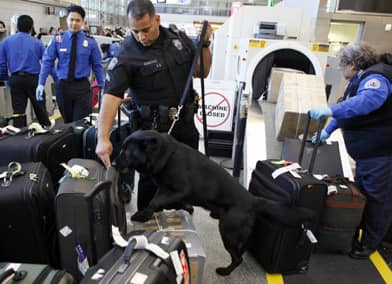A bomb-sniffing dog goes through the luggage at Los Angeles airport where body-imaging scanners are being introduced. (Damian Dovarganes/Associated Press)