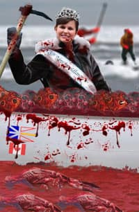 an analysis of the issue of seal hunt in newfoundland The seal business isn't booming any longer, but the great white north is  one  argument by fishermen is that in some areas seals gobble up too much  the  hunt, according to the guardian, and why the newfoundland and.