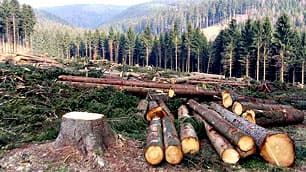 Virtually every tree that is cut or removed in B.C. would be  replaced under the provisions of a bill introduced in the provincial  legislature.