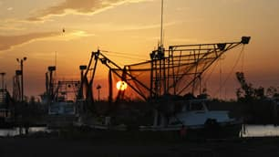 Shrimping and fishing boats are seen docked at sunrise in Venice, La.,  April 27, 2010. The seafood industry in the Gulf of Mexico could be adversely affected by the growing oil slick that resulted from the explosion and sinking of the Deepwater Horizon.