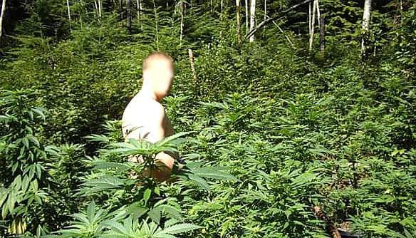 Suspect amidst plants