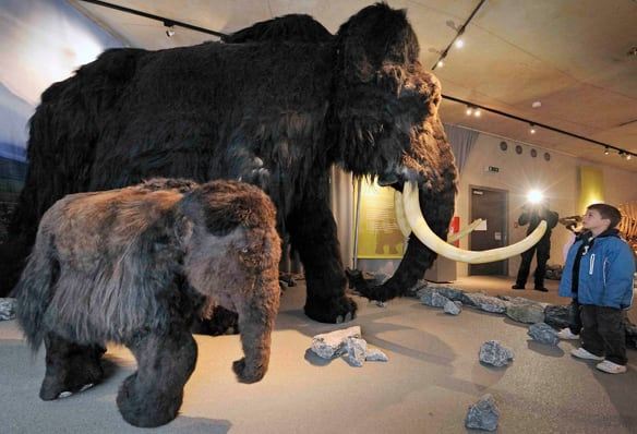 Arctic mammoths may have nursed longer than elephants because the long winter nights made it more important for infants to stay near their mothers to avoid predators, researcher Jessica Metcalfe suggested. These mammoth models are displayed at the Neande