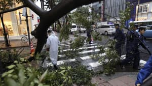 Police attempt to remove a tree toppled by strong wind due to Typhoon Roke at Ginza shopping district in Tokyo on Wednesday.
