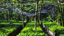 The company plans to start planting a coffee tree for each bag of coffee beans it sells