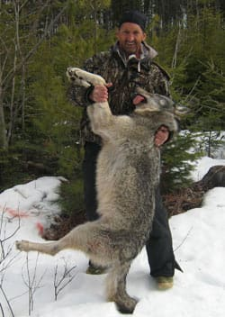 Jacques Mallet says he's surprised and saddened that the animal he shot was a wolf.