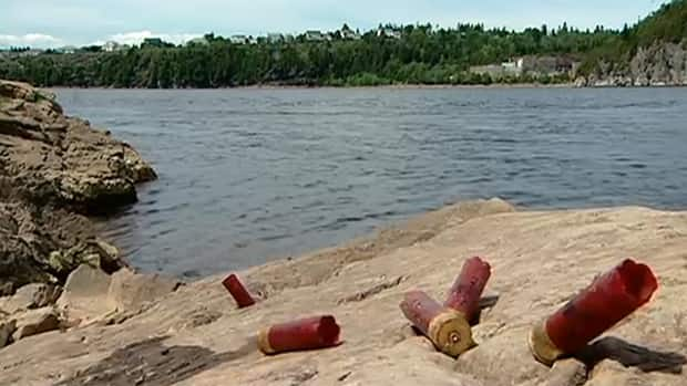 Millidgeville residents say someone is shooting cormorants along the St. John River.