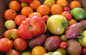 A basket of ripe heirloom tomatoes shows a diverse range of colour.
