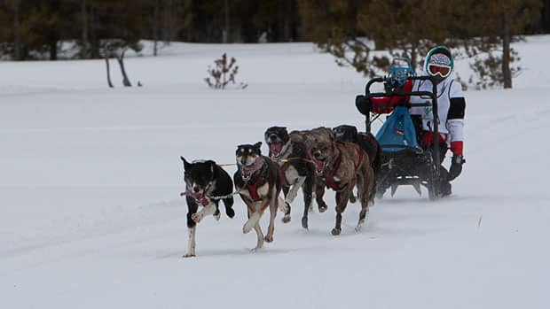One of the sports being cut from the 2016 games in Nuuk is dog mushing.
