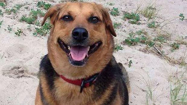 Rob Shura's dog, Pippin, was killed when it was caught in a trap recently at Manitoba's Grand Beach Provincial Park.