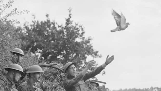 pigeons used in the war The conductive touchscreen display technology the pigeons used in training for war is now used in phones, tablets, wearables, laptops, and other devices.
