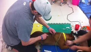 Chris Getzlaf, of the Saskatchewan Roughriders, prepares a dog for veterinarians.
