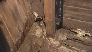 Homeowner Lindsay Denton says the home inspector didn't even go into the shed, where he would have seen the beam holding up the corner of her living room is rotten.