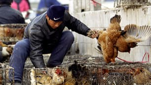 More outbreaks of infectious diseases such as H5N1 bird flu may occur as livestock continue to be brought into densely populated cities.