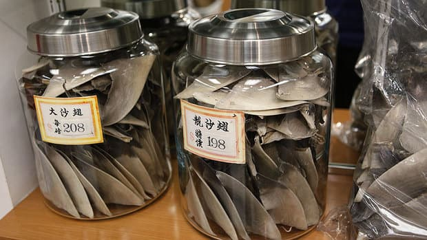 Shark fin soup: Should the delicacy be banned in Canada ...